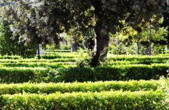 Hedges in a garden, background Stock Images
