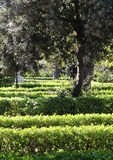 Hedges in a garden, background Royalty Free Stock Image