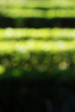 Hedges in a garden, blurred background Royalty Free Stock Image