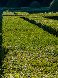 Hedges Stock Photography