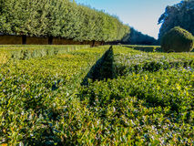 Hedges Royalty Free Stock Image