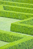 Hedges labyrinth Stock Photography