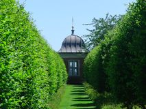 Between Hedges. Tall Garden Hedges royalty free stock photo