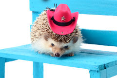 Hedghog with cowboy hat. Royalty Free Stock Images