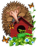 Hedghog over the birdhouse Stock Photography