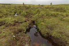 Hedland med bomullsgräs fotografering för bildbyråer