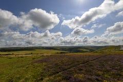 Hedlandskap, Exmoor Arkivbild
