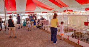 Hedrick's Petting Zoo Stock Photography