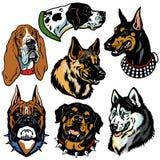 Hedss de los perros fijados Foto de archivo