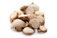 Hedychium-spicatum (ährentragendes Ginger Lily- oder Kapur-kachri) Stockfoto