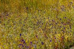 Hedyotis sp. flower mix Utricularia bifida. L. at Mukdahan Nation Park, Thailand stock photos