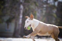 Heel en hond die lopen spelen royalty-vrije stock fotografie
