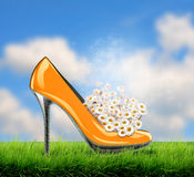 Heel shoe with daisy flowers inside. Beautiful hi heel shoe with daisy flowers inside on grass field, summer meadow on bright sunny day Royalty Free Stock Photography