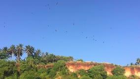 Heel wat adelaars die over een overzeese kust vliegen Mening van de grond HD slowmotion stock video
