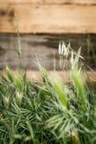 Heel wat aren in de tuin stock fotografie