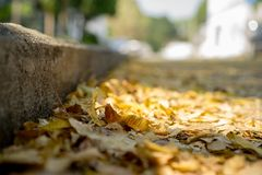 Heel wat bladeren met diverse gele toonkleur zijn neer op de weg in de herfst gevallen Royalty-vrije Stock Foto
