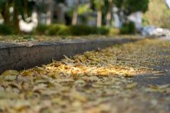 Heel wat bladeren met diverse gele toonkleur zijn neer op de weg in de herfst gevallen Stock Foto