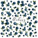 Heel wat blauwe bessen met bladeren, bosbessen, prentbriefkaar stock illustratie