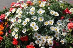 Heel wat bloemen Stock Fotografie