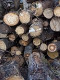 Heel wat droog gehakt brandhout wordt gestapeld royalty-vrije stock foto's