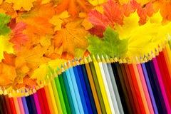 Heel wat esdoornbladeren en kleurpotloden Stock Foto