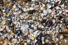 Heel wat gebroken shells wasten Oostzeeshor uit royalty-vrije stock foto