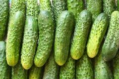 Heel wat groene komkommers Royalty-vrije Stock Fotografie