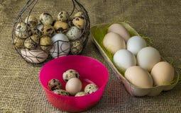 Heel wat kippeneieren en kwartelseieren liggen van een metaalstructuur die in de vorm van een hart en een oor op de houten lijst  Stock Foto's