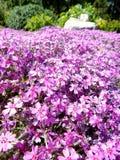 Heel wat kleine lilac bloemen, achtergrond Stock Afbeelding