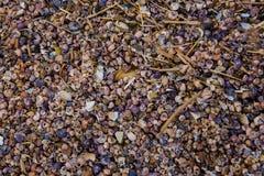 Heel wat kleine shells stock fotografie