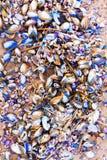 Heel wat kleurrijke shells op het zand Royalty-vrije Stock Foto