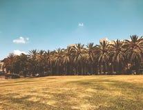 Heel wat palmen in het IR park van Gan Ha ` in Rishon Le Zion, Israël stock fotografie