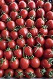 Heel wat rode tomaten in de opslag stock foto