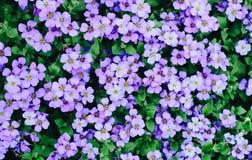 Heel wat roze bloemen stock afbeelding