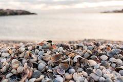 Heel wat shells door het overzees stock afbeeldingen
