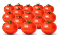 Heel wat Tomaten vector illustratie
