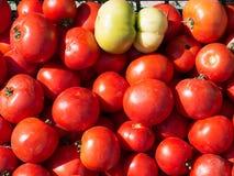 Heel wat verse tomaten op bank bij bazaarteller Royalty-vrije Stock Foto