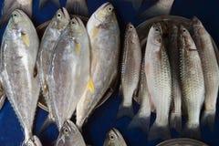 Heel wat verse zeevissen grijze kleur en verschillend grootte en type voor verkoop op een blauwe achtergrond Stock Foto
