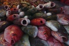 Heel wat verse zeevissen met hun monden open voor verkoop, een hoop van verse overzeese mijnbouw: grijze vissen, rode vissen Stock Afbeelding