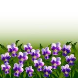 Heel wat violet viooltje bloeit op achtergrond van bladeren Royalty-vrije Stock Fotografie