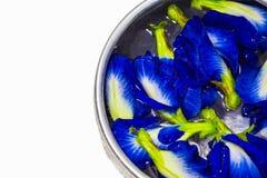 Heel wat Vlindererwt of Blauwe erwt bloeit op water in de zilveren kom Stock Foto