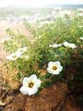 Heel wat witte bloem Royalty-vrije Stock Foto's