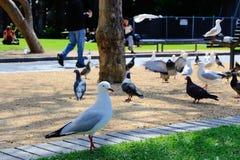 Heel wat zeemeeuw en vogels in het park Stock Foto
