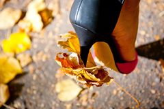 Heel women`s shoes and autumn leaves strung on it stock image