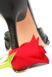 Heeland Rose Photographie stock