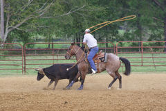 The Heeler at the Roping. A roper goes for the heels of a calf Royalty Free Stock Photo