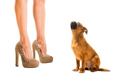 Heels and dog Royalty Free Stock Photo