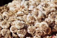A heep of fresh garlic at a street marke Stock Images