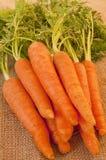 Heerlijke bos van verse en knapperige wortelen Royalty-vrije Stock Fotografie