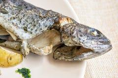 Heerlijke geroosterde forel met aardappel, internationale keuken Royalty-vrije Stock Foto's